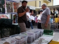 castellalto-24-6-2013-4